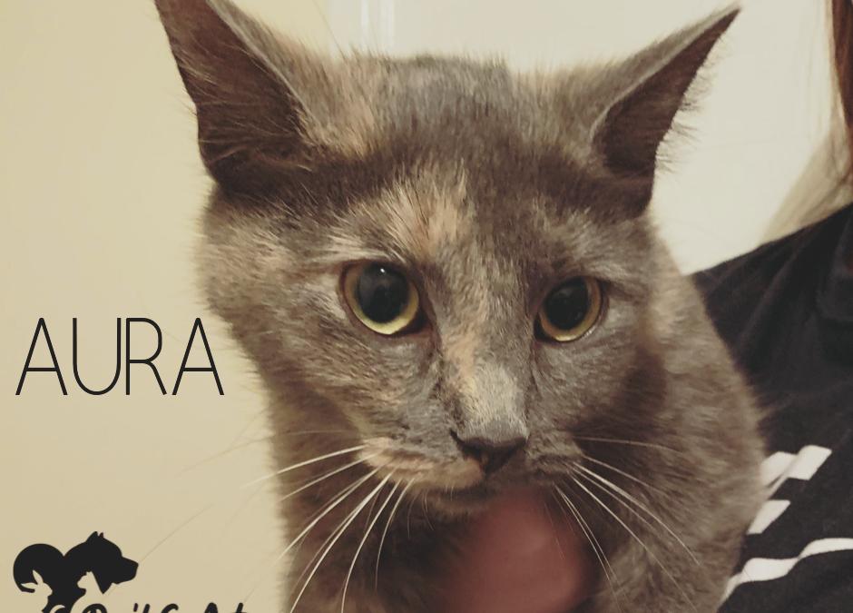 AURA – Adopted!