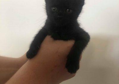 Chloe – Adopted!