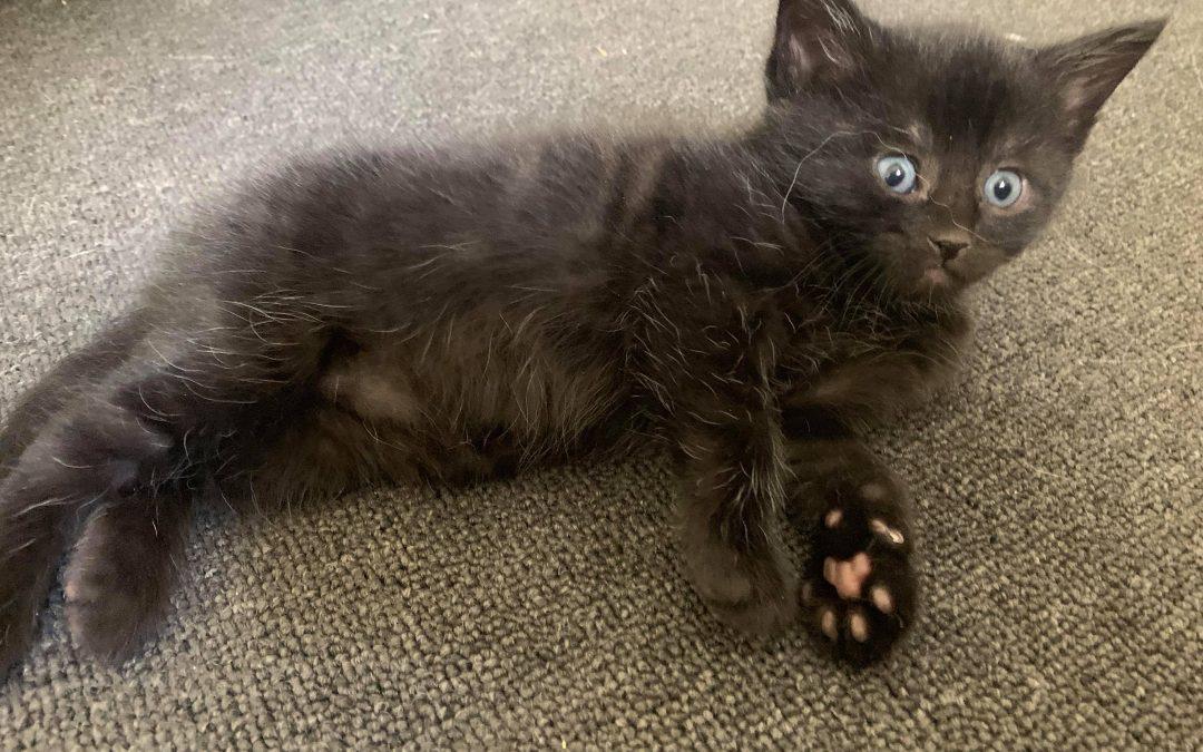 KIKI- Adopted!