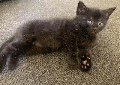Kiki – Adopted!