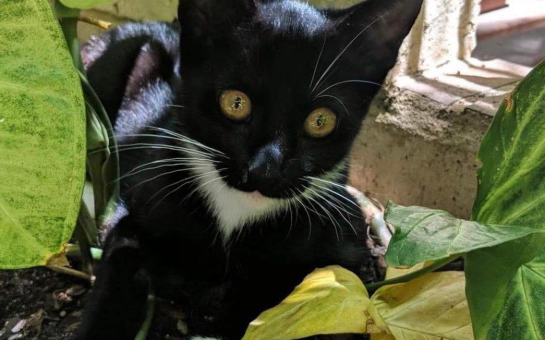 FINN – 5 Months Old – Adopt Me