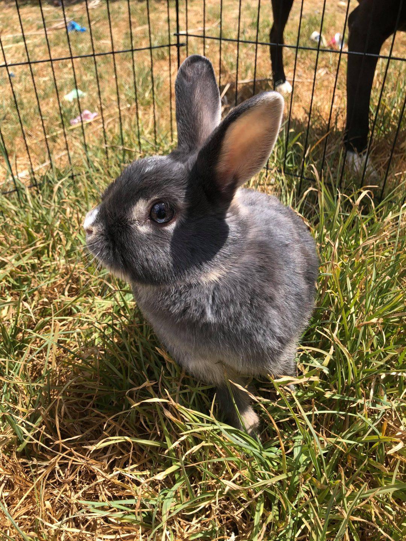 Meet SASHA – 'Sassy's' rabbit waiting for a forever home!