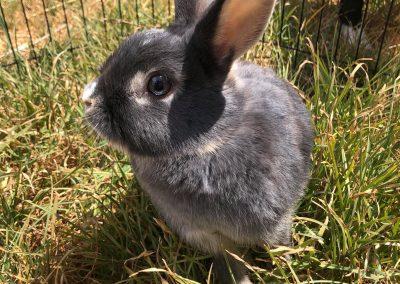 SASHA – Adopted!