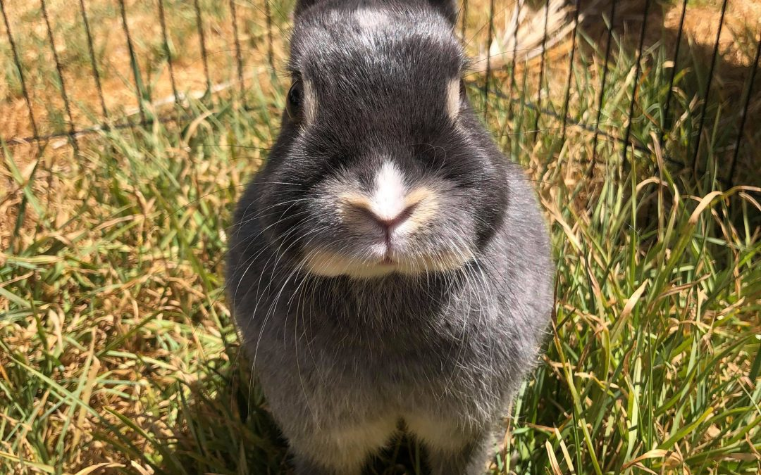 You know you want some Sass' in your life – Netherland Dwarf X