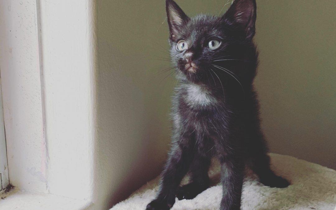 MOWGLI – The Survivor – 5 Weeks Old – Adopted!