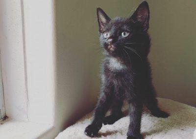 MOWGLI – Adopted!