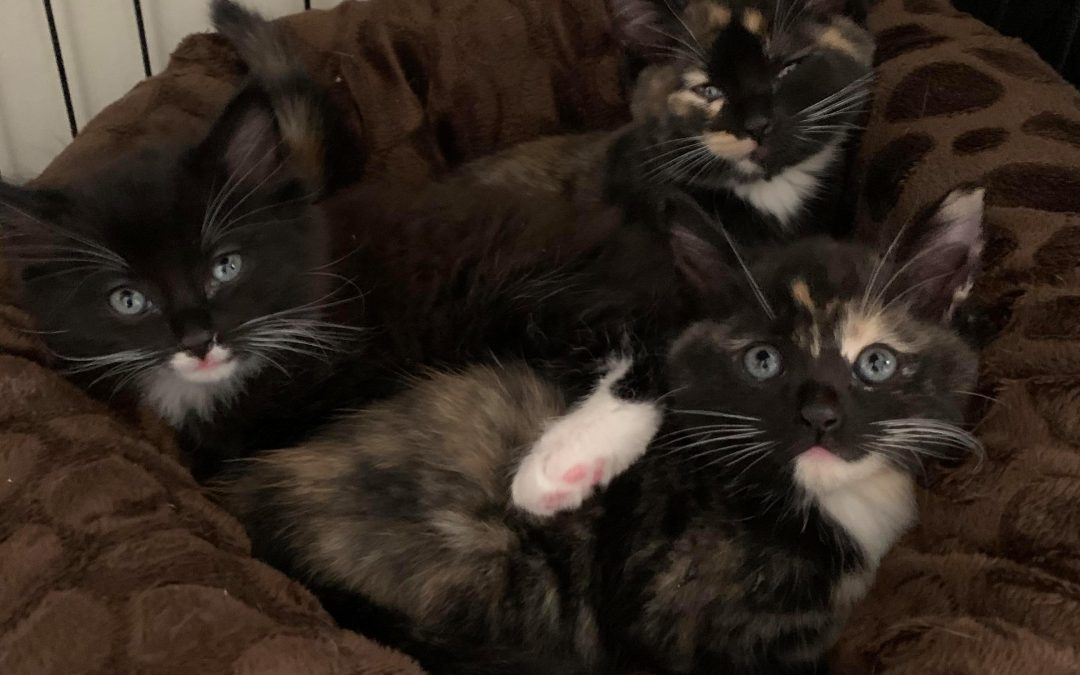 Our New Babies – The Three Musketeers – No longer available!