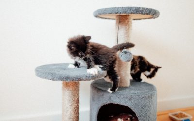 Adopt WINSTON / ZARA / MEI – 6 weeks old – Adopted!