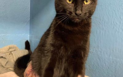 Gavin – The Amputee Cat – Adopted