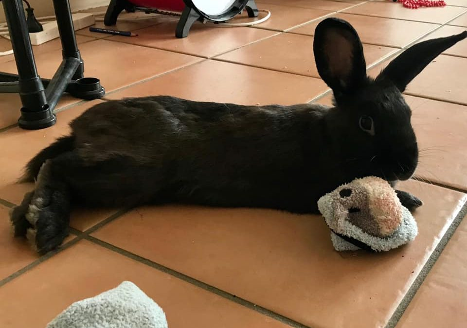 GRIT – Somebunny adopted me!