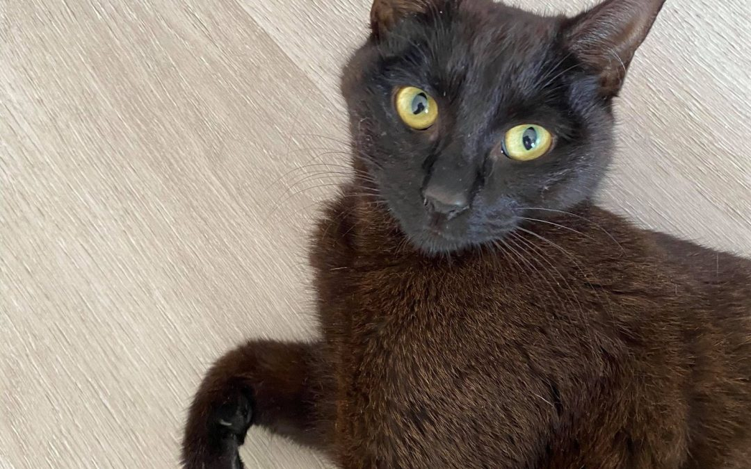 Meet BETTY – 8 months of age, abandoned & expecting kittens