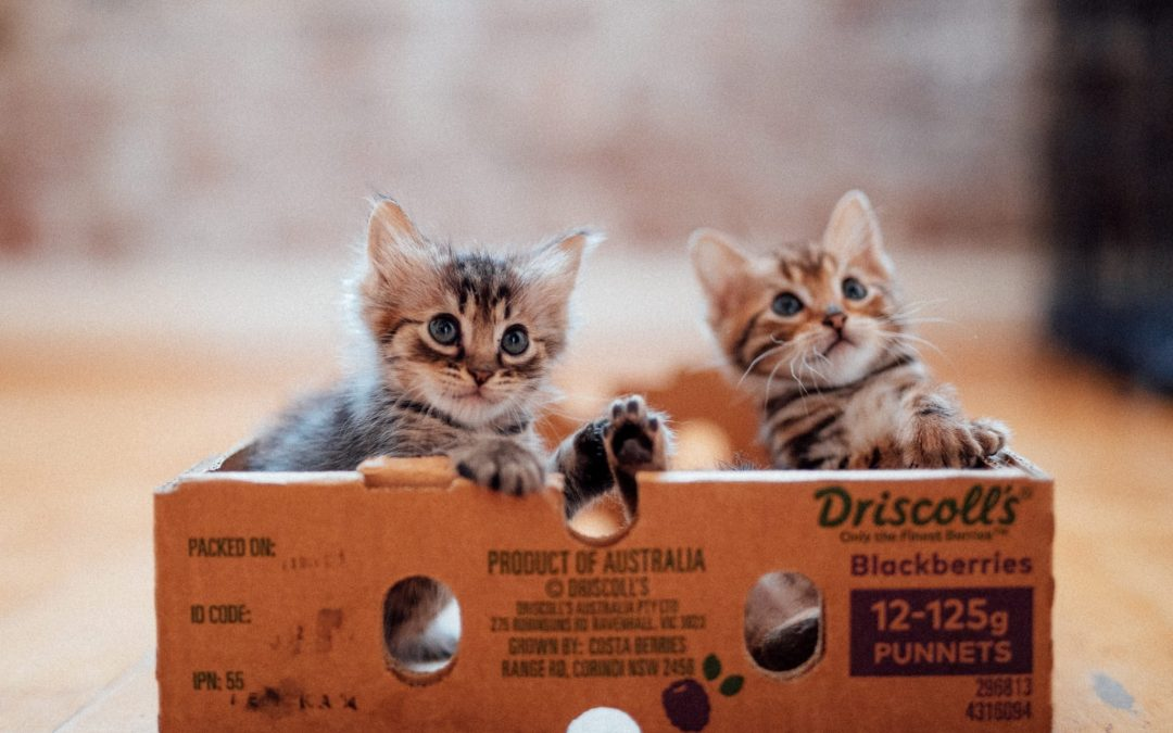 Frankie and Fletcher – 7 weeks old (female & male)