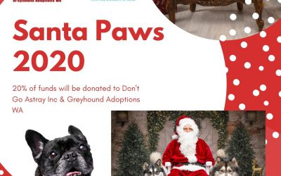 WICCA & WOLVES Photography – Santa Paws 2020