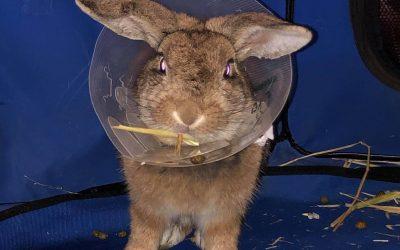 HECTOR had his surgery!