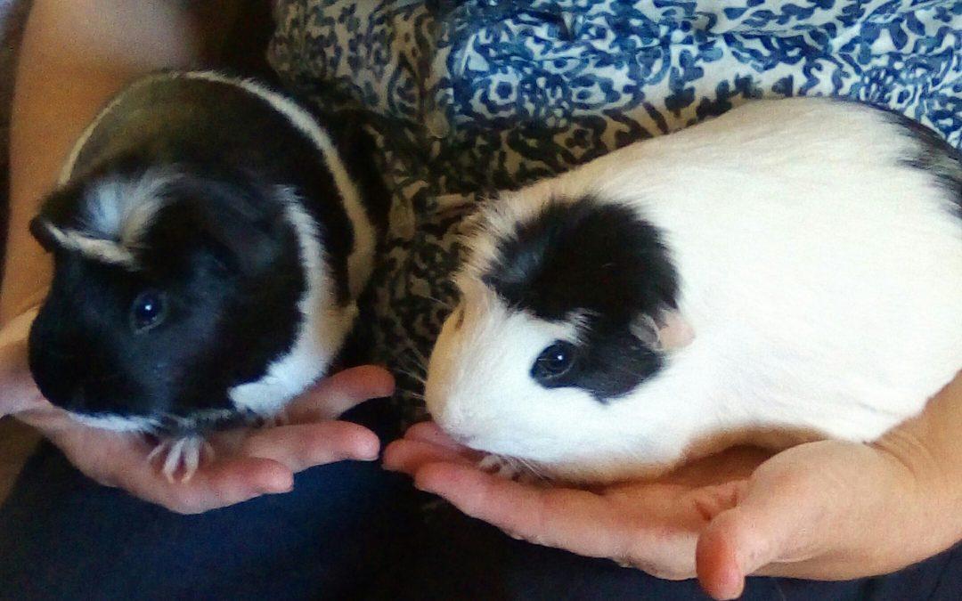 PEANUT & JELLY – Forever Homed!