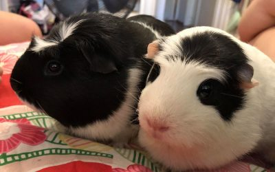 Welcome JELLY & PEANUT