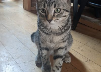 GRAYSON – 16 weeks old – Male – (On Trial)
