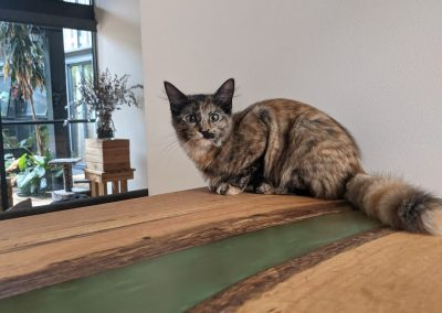 SQUIRREL –  18 weeks old  – Female – Forever Homed!