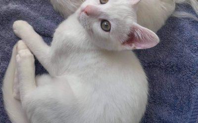BINKY – Female – 14 weeks old